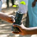 Distribute Saplings
