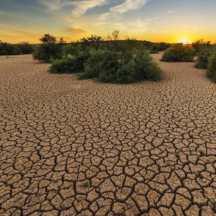 dry-cauvery