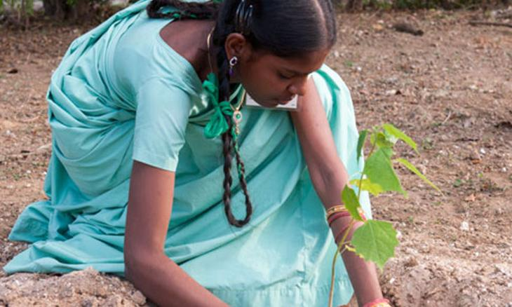300,000 Students Plant 900,000 Saplings