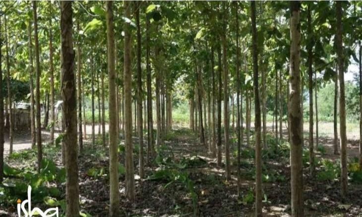 Agro-Forestry Along River Banks: How Exactly Do Trees Help