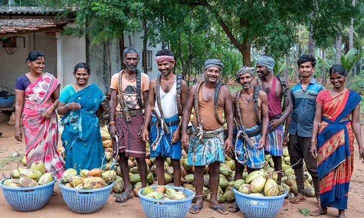 Coconut Farmer