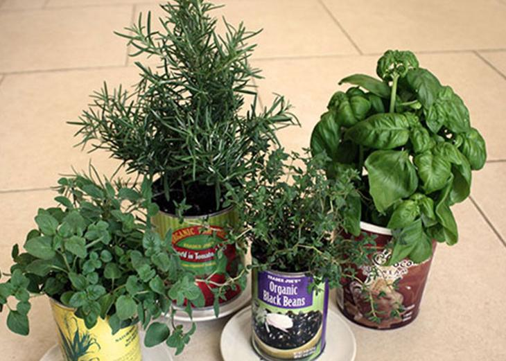 "Grow your own ""Container Garden"""