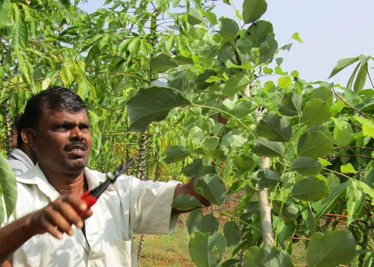 Interested in Natural Farming? Try Zero Budget Natural Farming