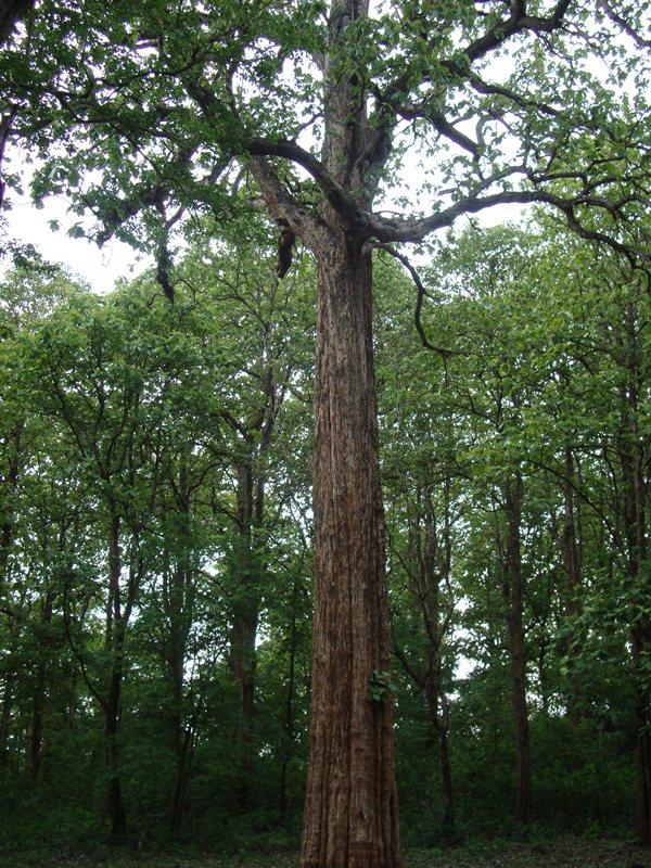 Trees For Life Talking Teak